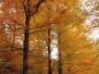 Der Schwarzwald im Herbst