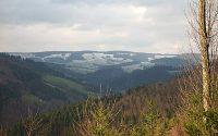 Der Schwarzwald in der Nähe von Buchenbach