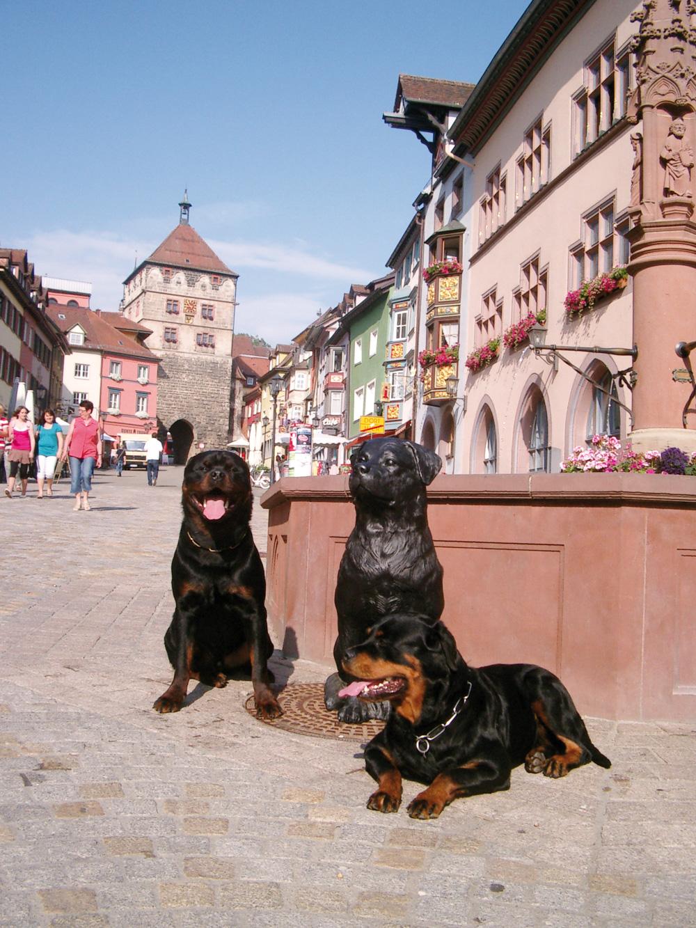 Echte Rottweiler (© Tourist-Info Rottweil)
