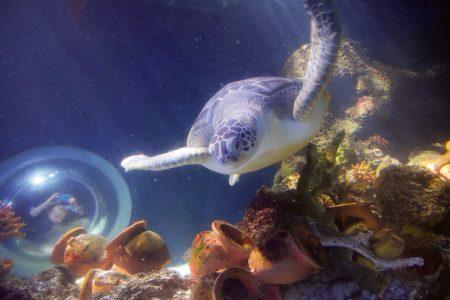 Wasserschildkröte in Konstanz (© Reinhold Wagner)
